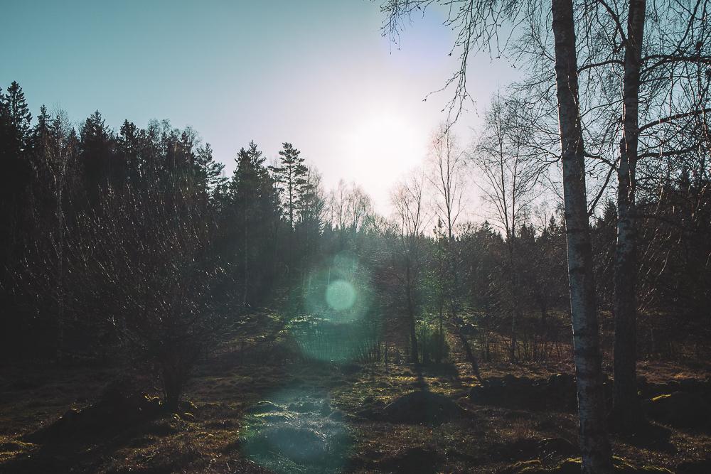 En helg i skogen